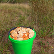 Stock Photo: Mushrooms in pail