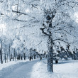Winter landscape — Stock Photo #6942944