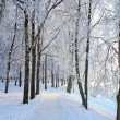 Winter landscape — Stock Photo #6943089
