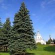 Fir trees in town park — Stock Photo #6953644
