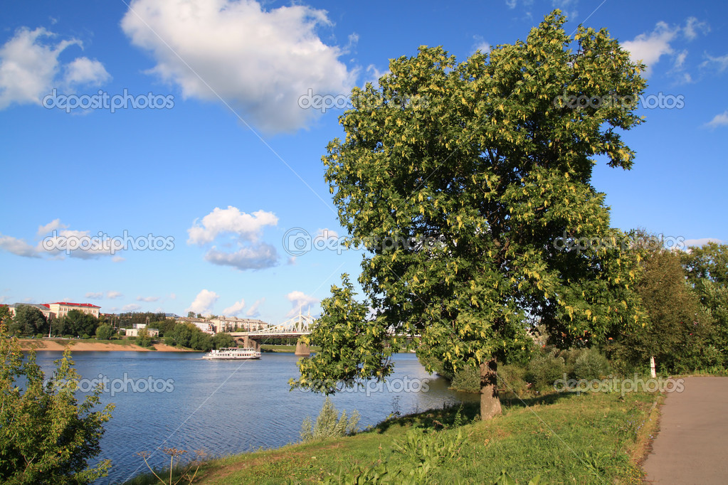 Tree in park ashore river  Stock Photo #6952667