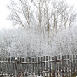 Stock Photo: Old gray fence in snow