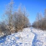 Wet lane in winter park — Stock Photo #7098321