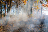 Fire in wood — Stock Photo
