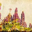 Lupines on field on grunge background — Stock Photo