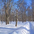 Snow lane in winter park — Stock Photo