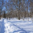 Stock Photo: Snow lane in winter park