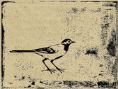 Silhouette bird on grunge background — Foto de Stock