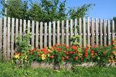 Flowerses junto a la valla rural — Foto de Stock