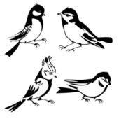 Birds silhouette on white background, vector illustration — Stock Vector