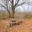 Stock Photo: Aging bench in autumn park
