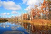 Autumn wood on coast river — Stock Photo