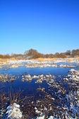 Autumn ice on freeze marsh — Stock Photo