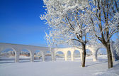 Snow tree near ancient wall — Stock Photo