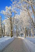 Carril de la nieve en invierno park — Foto de Stock
