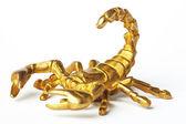 Gold scorpion — Stock Photo