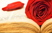 Rose on the book — Stock Photo