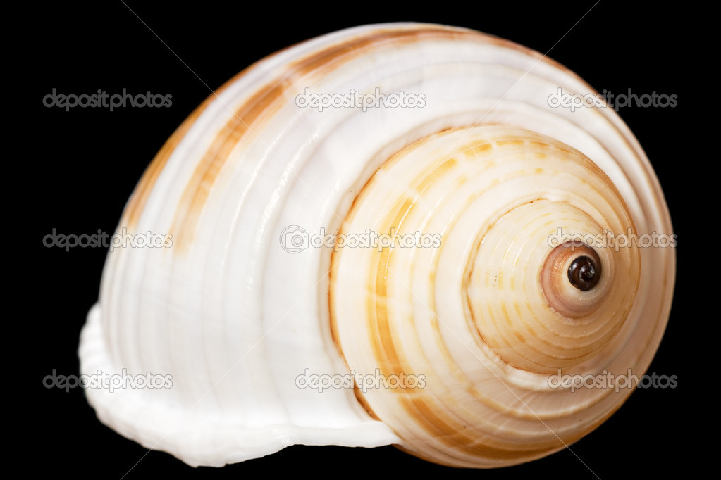 Seashell isolated on black background — Stock Photo #7291492