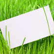 Cut-away to a wet grass — Stock Photo #7457603