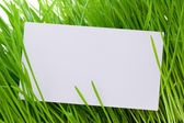 Cut-away to a grass — Stock Photo