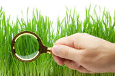 Magnifying glass in hand above green grass — Stock Photo