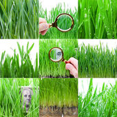 Focus on green money. Green grass collection. — Stock Photo