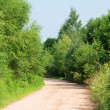 Stock Photo: Empty forest road