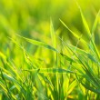 Bright vibrant green grass close-up - Stockfoto
