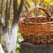 Stock Photo: Old wicker basket in autumn garden