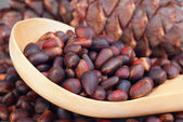 Pine lump and pine nuts — Stock Photo