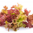 Stock Photo: Lettuce on a white background