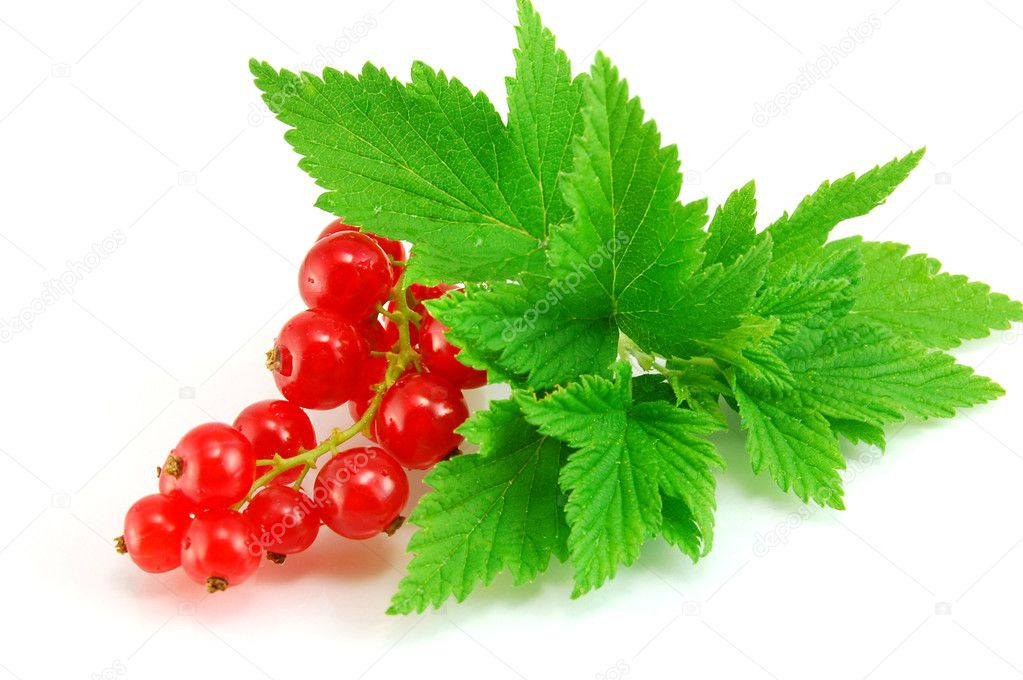 Isolated red currant — Stock Photo #7008747