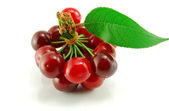 Cherries on white background — Stock Photo