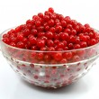 Isolated red currant — Stock Photo