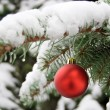 Royalty-Free Stock Photo: A red bauble on snowy pine