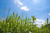 芝生のフィールド — ストック写真
