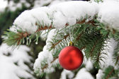A red bauble on snowy pine — Stock Photo
