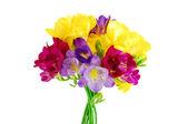 Yellow and violet fresia on white — Stock Photo