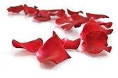 Pétales de roses rouges sur fond blanc — Photo