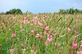 Flower Field — Zdjęcie stockowe