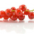 Stock Photo: Isolated red currant