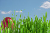 Red easter eggs in green grass under blue sky — Stock Photo