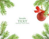 Galho de árvore do pinho e bola de Natal — Fotografia Stock