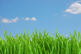 Fresh green grass under blue sky — Stock Photo