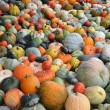 Royalty-Free Stock Photo: Crop of pumpkins