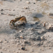Stock Photo: Crab on beach