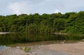 тропическое озеро — Стоковое фото