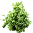 Cilantro or coriander — Stock Photo