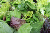 Close up of leafy greens — Stock Photo