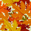 Stock Vector: Autumn background, seamless tile with maple leaves